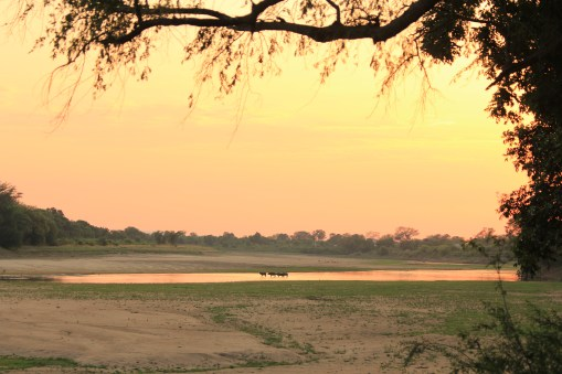 Campsite at Croc Valley Camp overlooking the Luangwa River