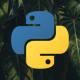 Python programming language logo on a background of palm tree leaves