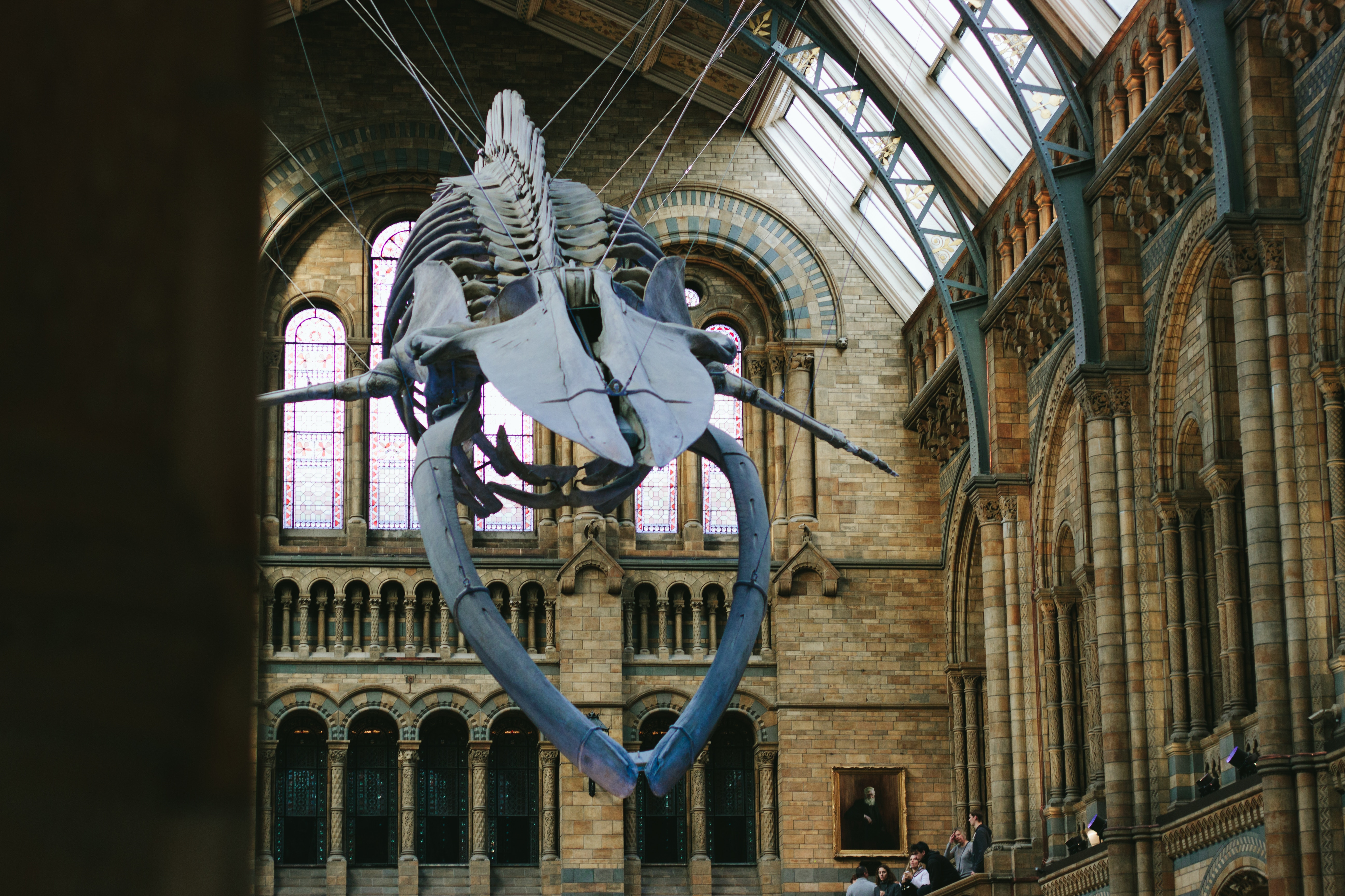 The whale at the Natural History Museum