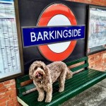 Dog stood on bench in front of the roundel at Barkingside London Underground Station