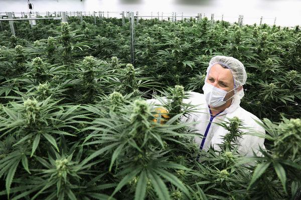 Marijuana legalization in Candada