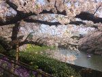 優美な時間ー千鳥ヶ淵のボートで桜を堪能