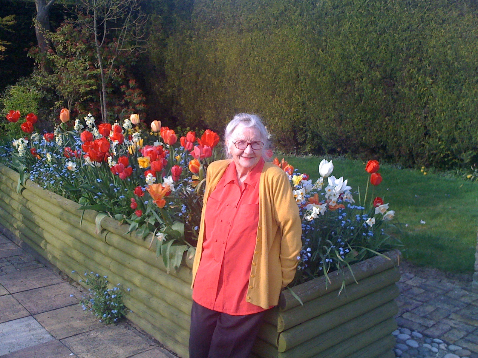 Tulips, daffodils, forget-me-nots, container gardening, colour