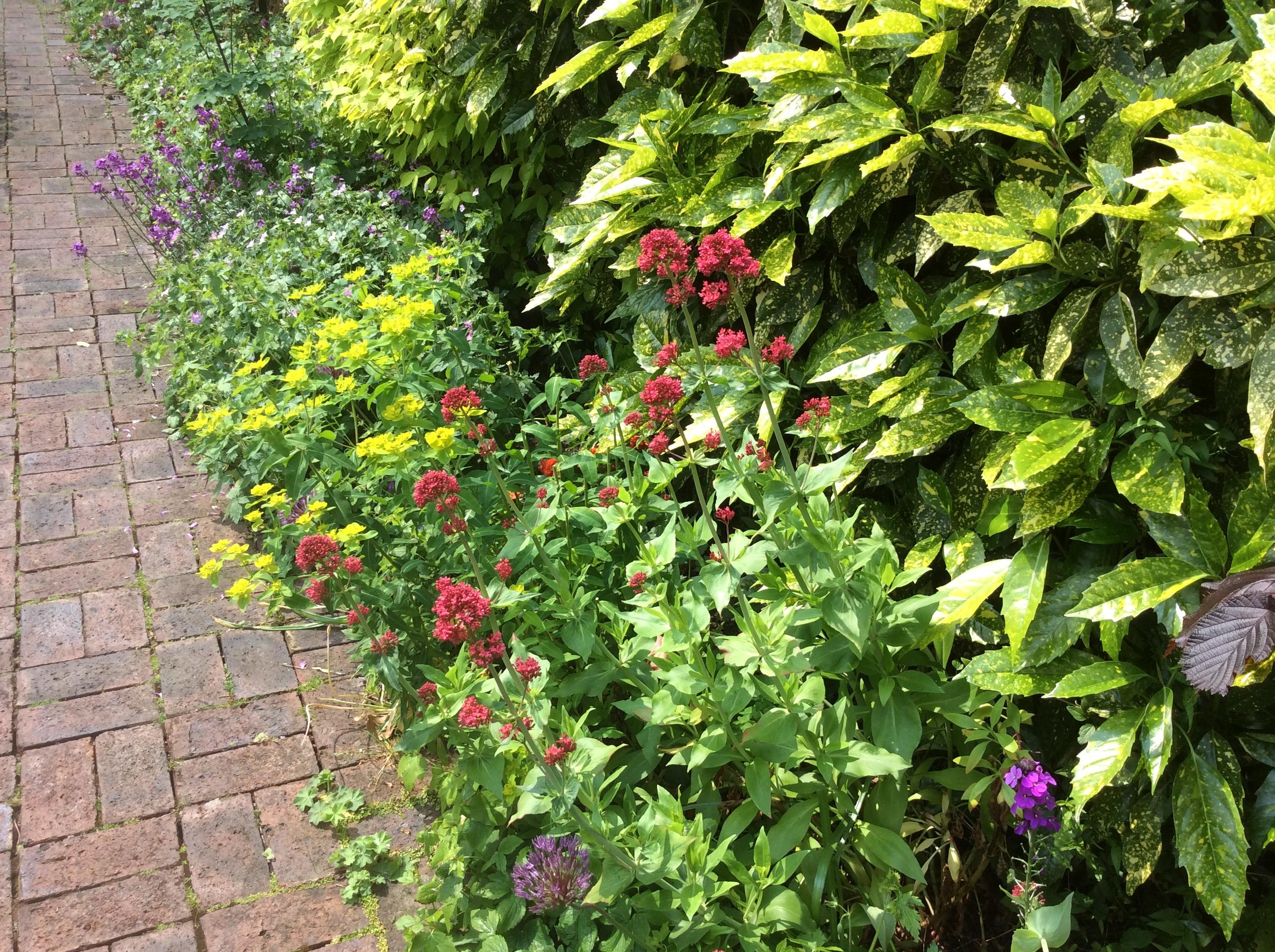 weeds in a cottage garden