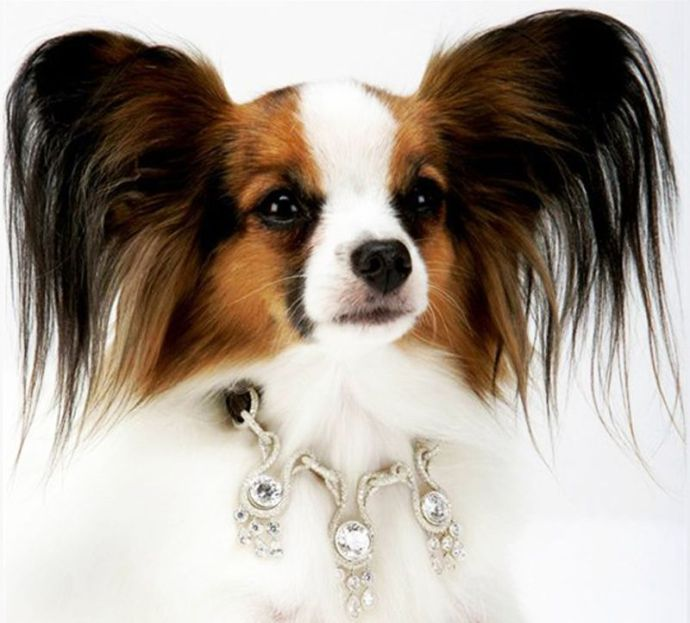 Luxury Products For Pampered Pets - Amour Amour Dog Collar By I Love Dog Diamond