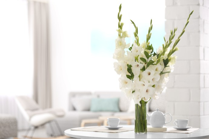 Vase with beautiful white gladiolus flowers on wooden table in living room.