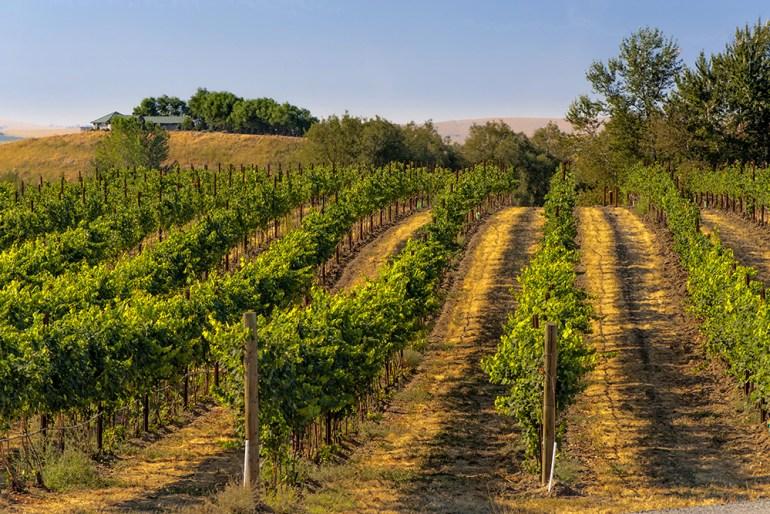 USA, Eastern Washington, Walla Walla vineyards