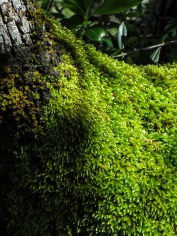 Moss alongside the Sever River