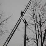 Firefighter rescuing a cat from a tree
