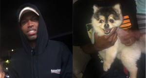 Daniel Sturridge finds missing dog Lucci