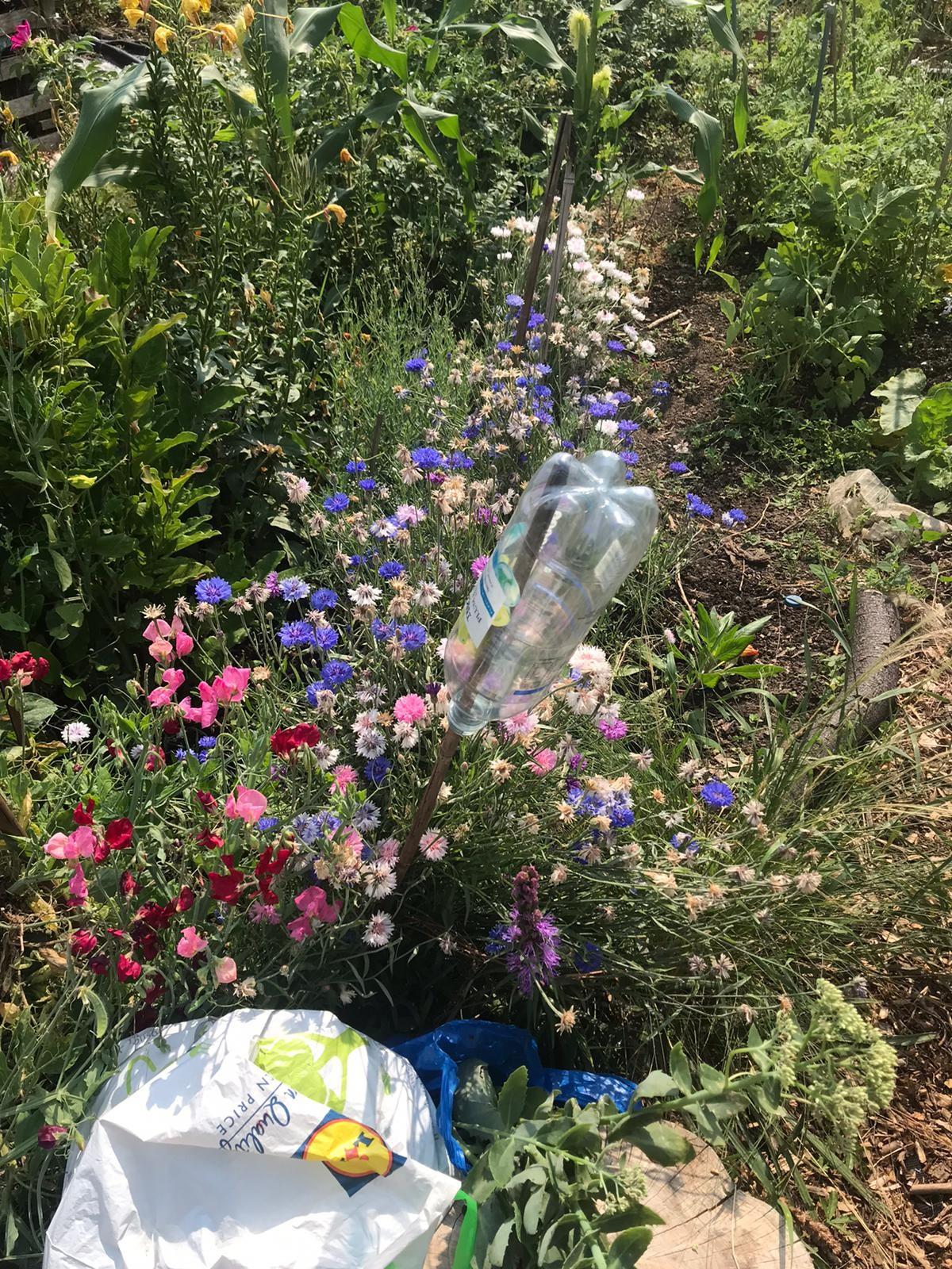 Best Mini Garden: Maureen at Calthorpe Project