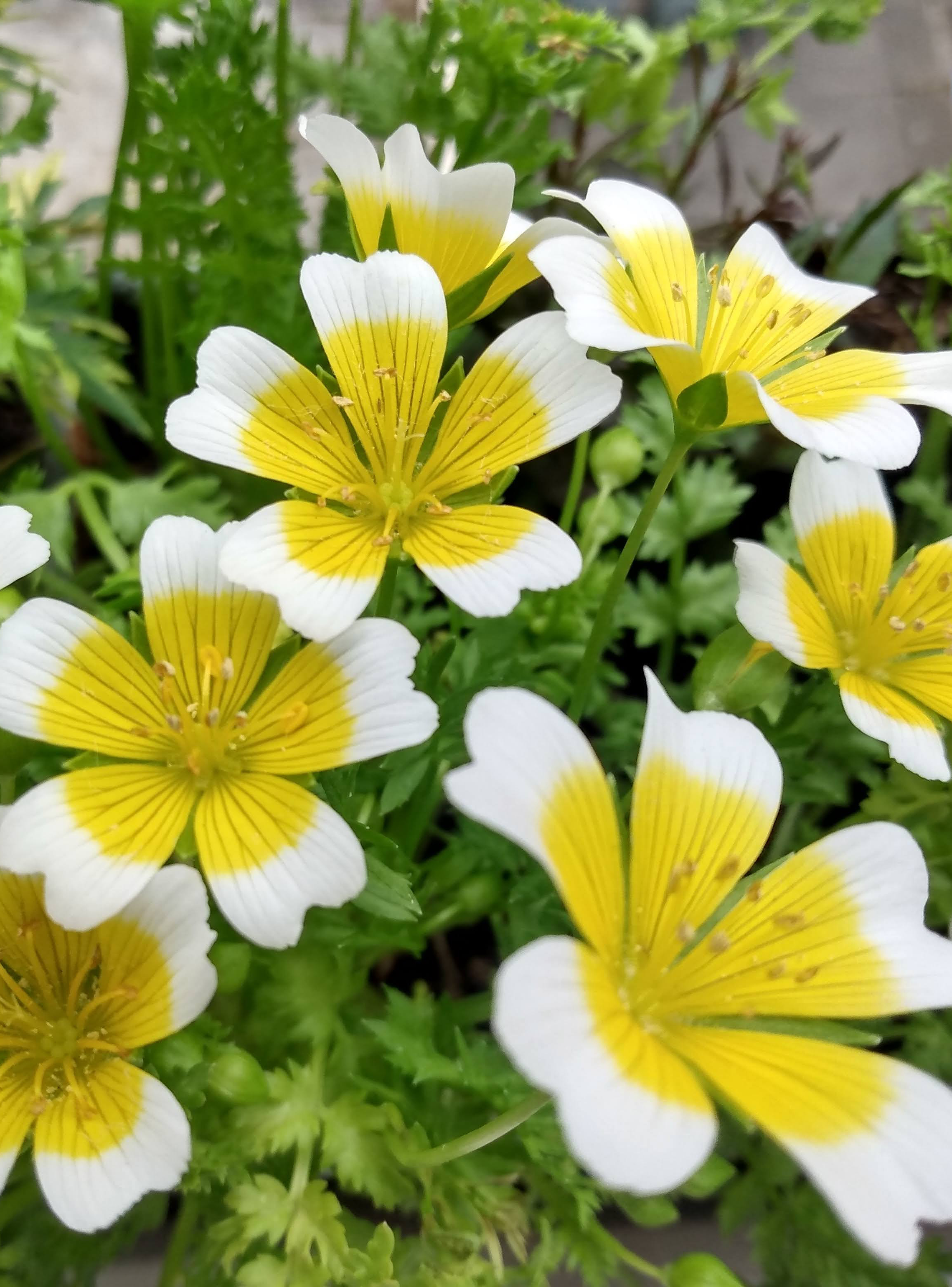 Best pot plant winner - Seeds Project