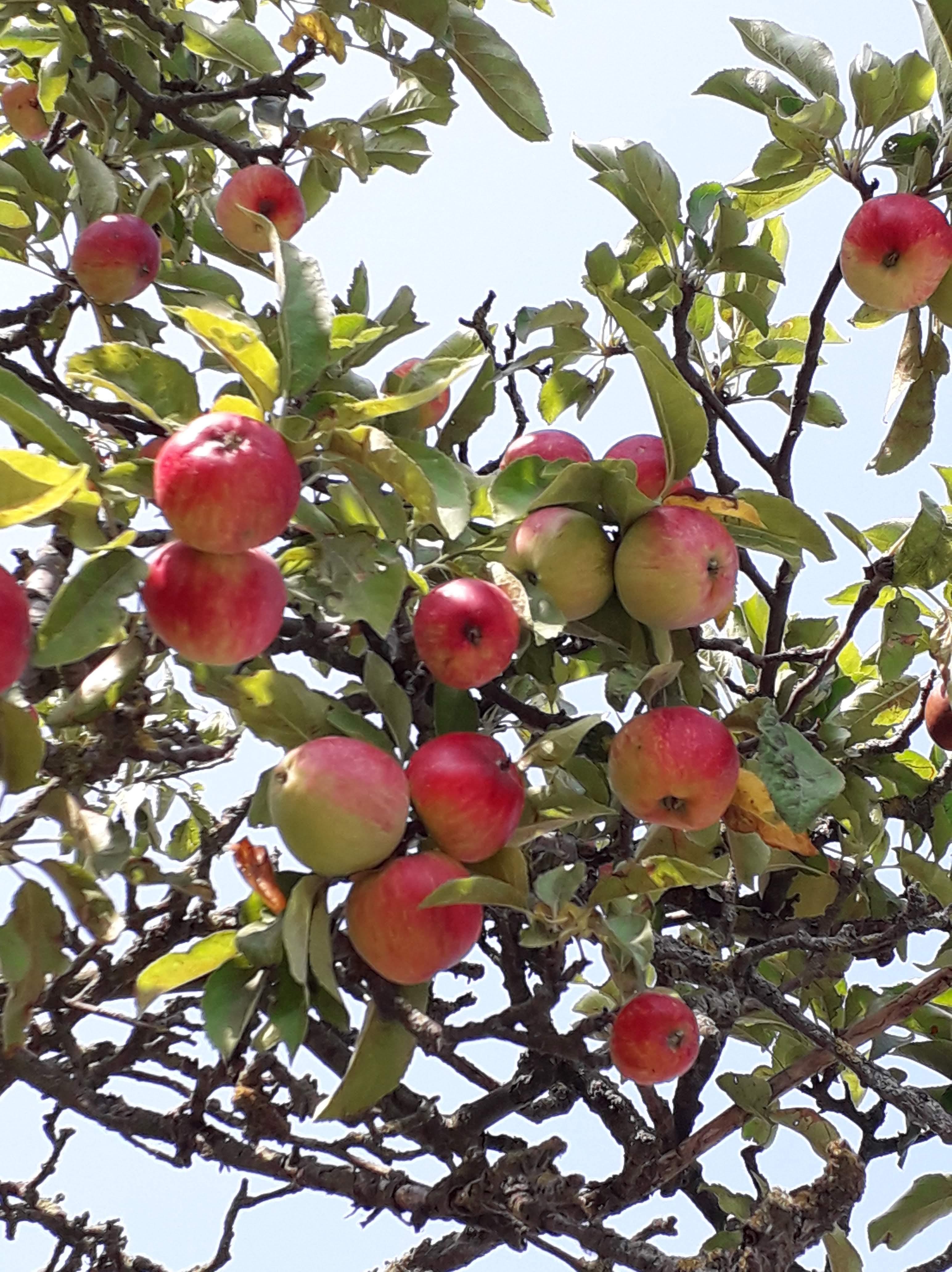 Best individual homegrown fruit or veg winner - Seeds Project
