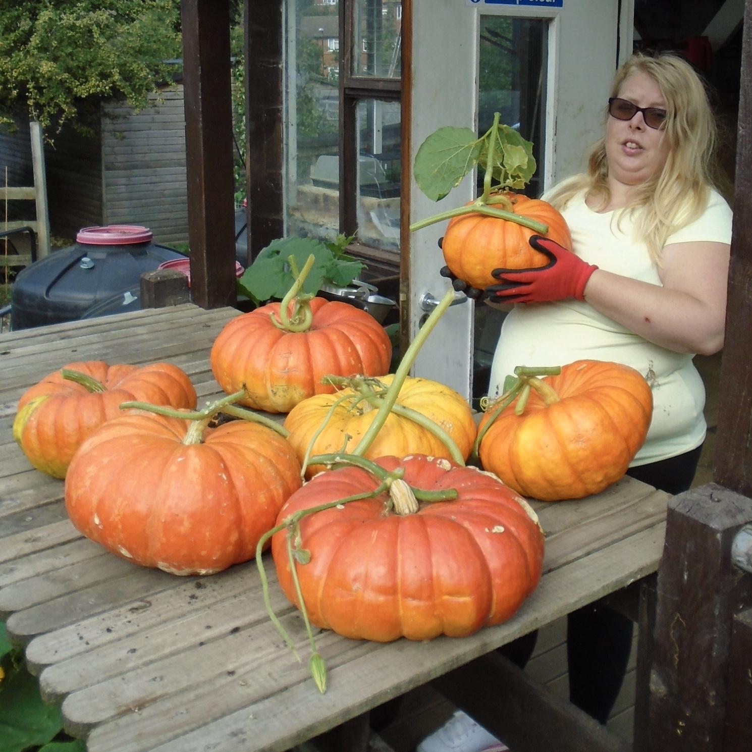 Heaviest Pumpkin: Surrey Docks Farm