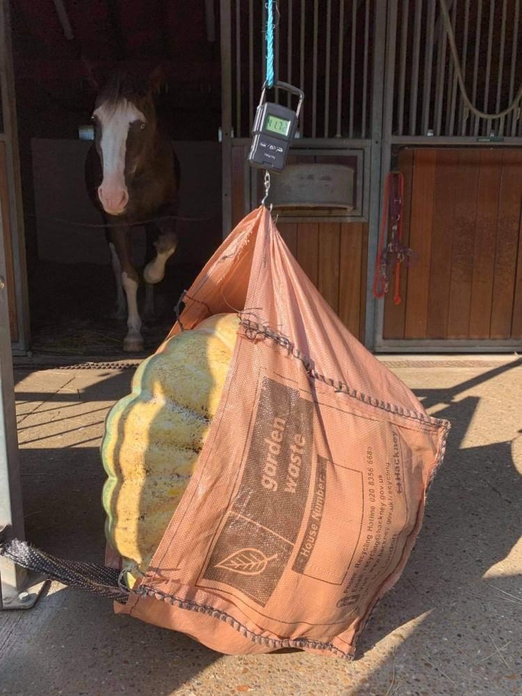 Heaviest Pumpkin winner - Kentish Town City Farm