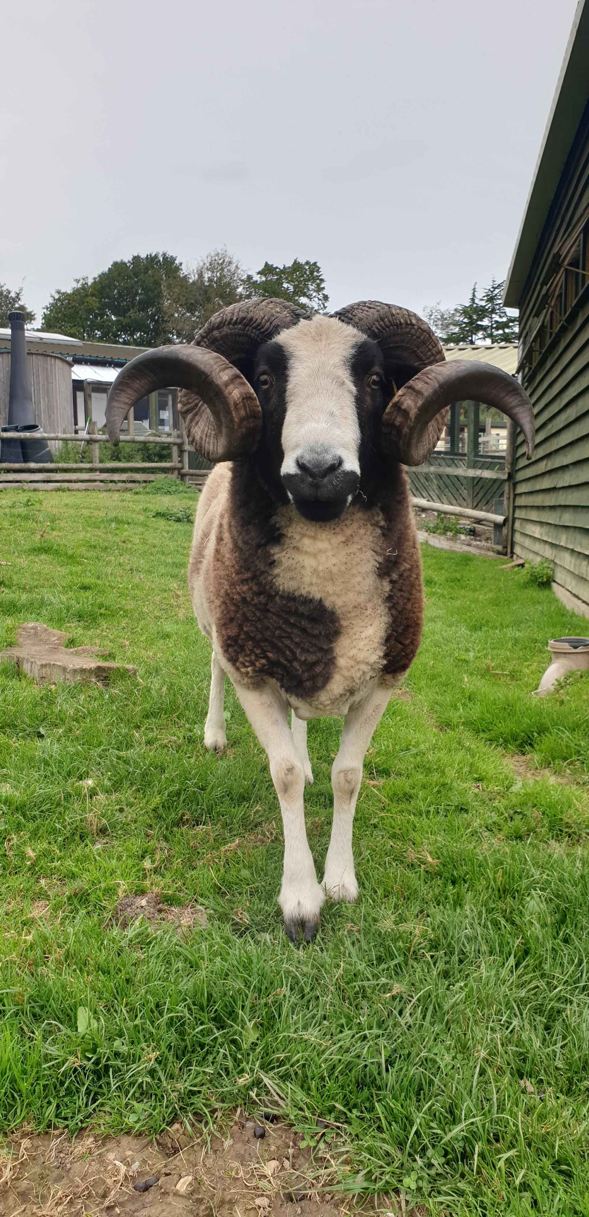 Best Animal Portrait: Loki, Lamborne End