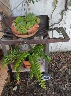 Quirkiest Container: Succulent BBQ, Calthorpe Community Garden