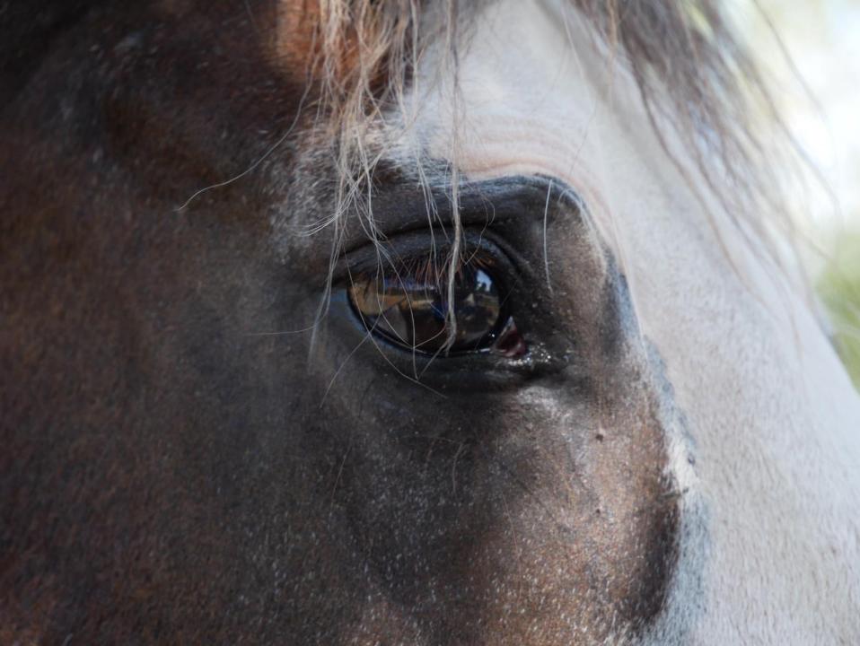 Best Picture of Animal winner - Kentish Town City Farm