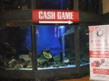 The Casino Barriere: leave the fish at the entrance