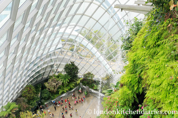 Waterfall at Gardens by the Bay, Could Forest in Singapore
