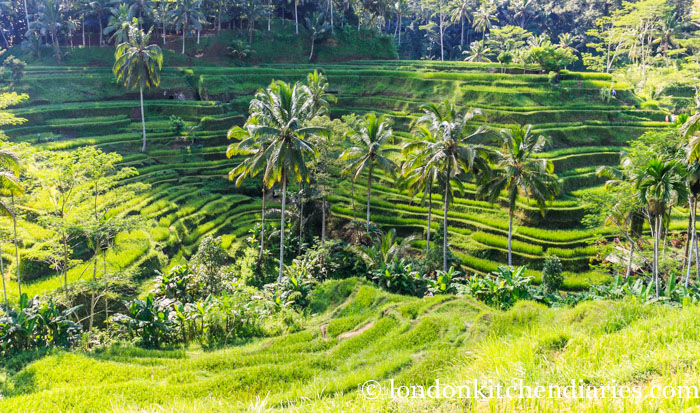 Stunning view of the Tegallalang Rice Terraces close to Ubud in Bali