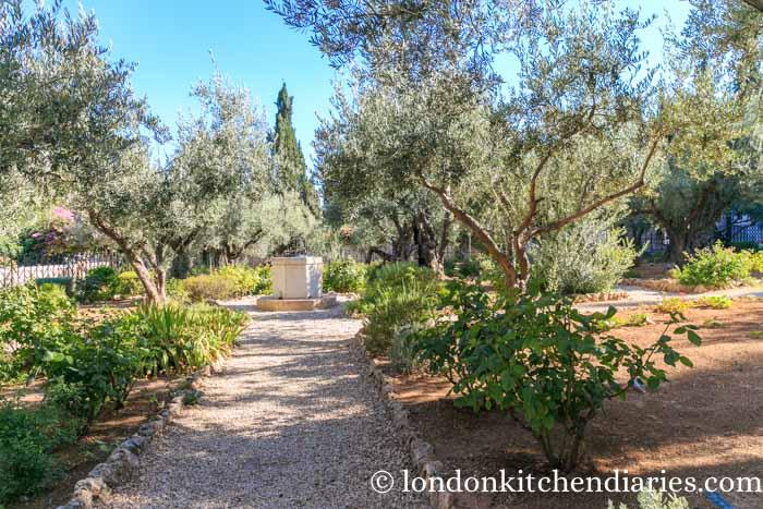 Garden of Gethsemane in Jerusalem Israel