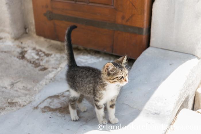 Cute Kitten outside of Süleymaniye Mosque Istanbul Turkey