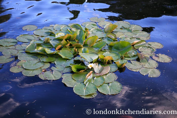 Lilly Pond at Kentisbury Grange North Devon