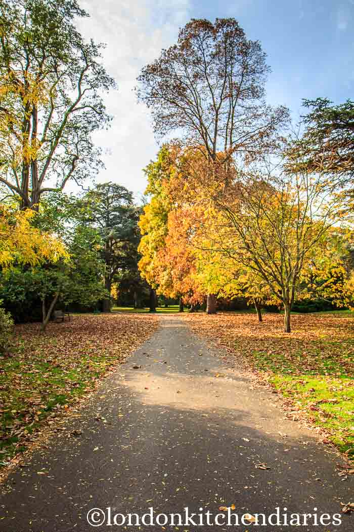 Autumn walk through Kew Gardens London