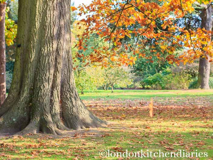 Falling leaf in Kew Gardens