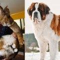 Thumbnail for post: Pet/food