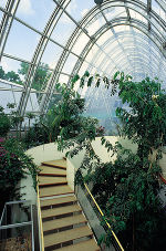 Graz Botanical Garden Greenhouse 5