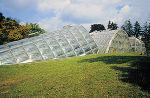 Graz Botanical Garden Greenhouse 4