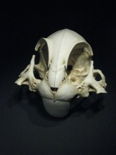Bunny Cranium from Lee Hyungkoo's Animatus series