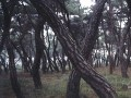 Bae Bien-U, Sonamu (Pine Tree), 135x260cm