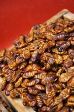 Tasty beondegi: Silkworm pupae