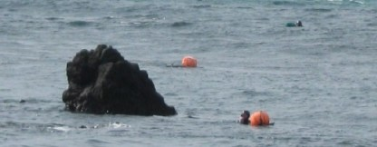 Off the rocks, women divers, like a group of seals... The gourds they use as buoys hold the nets of fish, shellfish and octopus - whatever they find to catch - and also provide a quick rest before they dive down again. Women have learned to dive this way in Jeju for centuries.