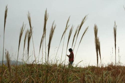Mother grass
