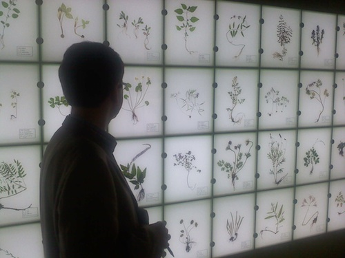 Inside the herbal medicine museum in Sancheong-gun