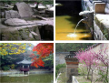 Thumbnail image for The Changdeokgung's Secret Garden – A Part of Nature