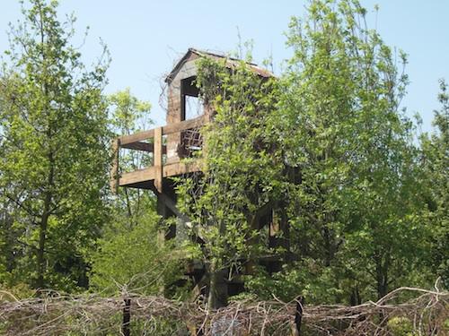 Hwang Jihae's Quiet Time garden at Chelsea