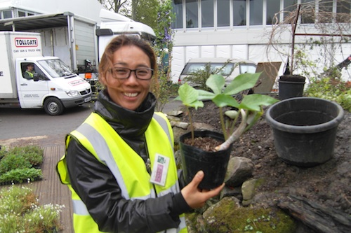 Hwang Jihae with a rare Korean woodland plant, waiting to find a home in her DMZ garden