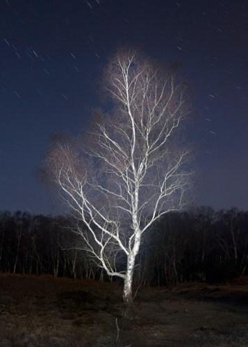 Kim Shin-wook: Matley Wood 2 (2012)