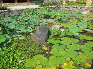 The pond of the Nobleman's Garden