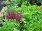 Dark pinks among the bright green ferns