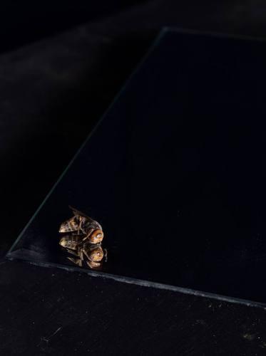 Chung Heeseung: Dead Bee (2013)