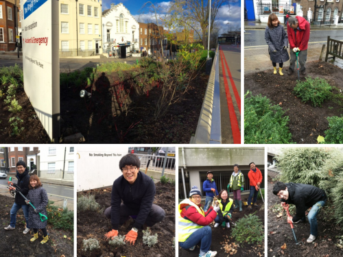 Featured image for post: Koreans help create a garden for London's Royal Free Hospital
