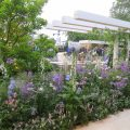Thumbnail for post: Hay Joung Hwang wins Silver Gilt at Chelsea Flower Show