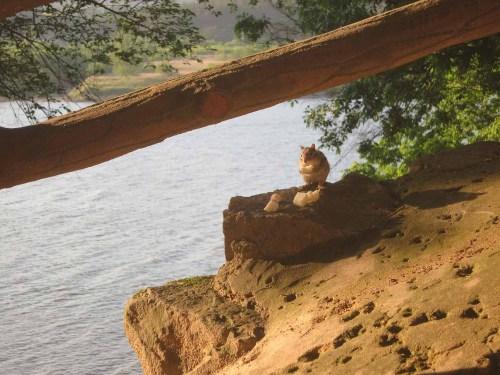 Wildlife at Goransa temple