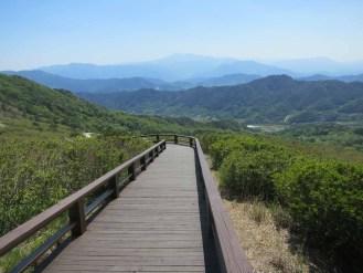 The Hwangmaesan walkways that enable you to walk through a sea of pink